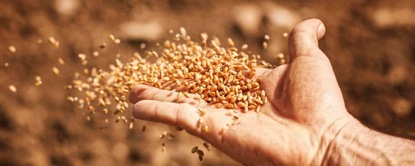 Как собирают дикие семена на случай апокалипсиса
